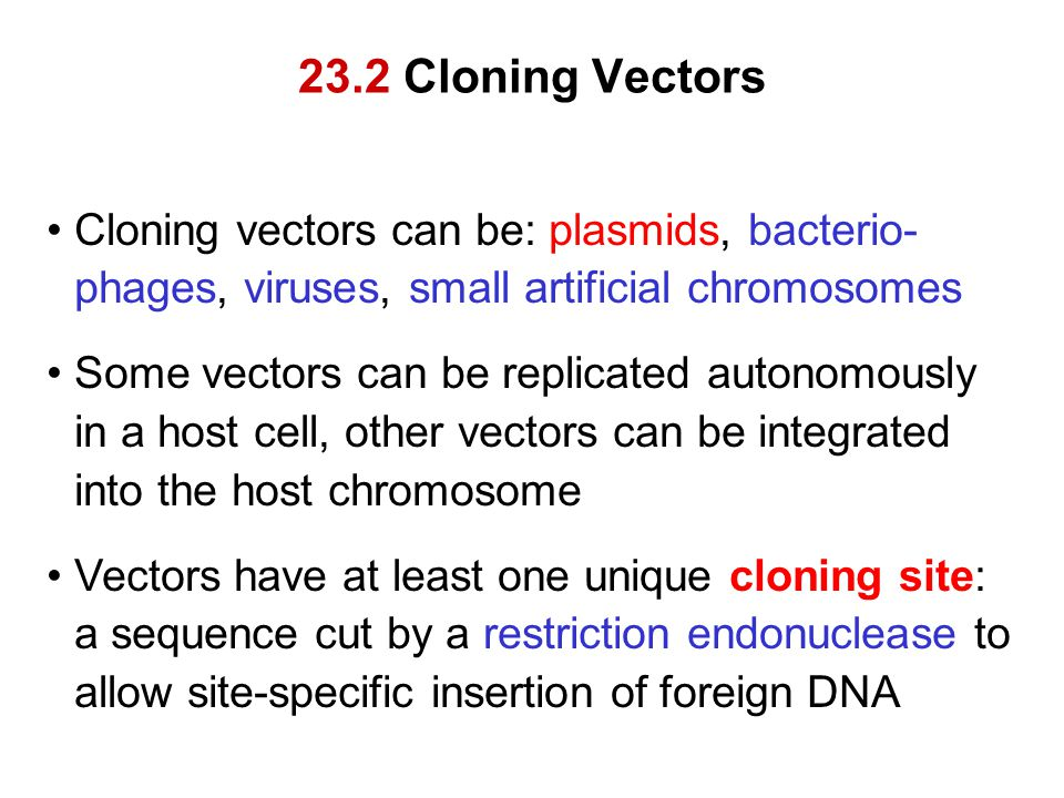 23.2 Cloning Vectors Cloning vectors can be: plasmids, bacterio-phages, viruses, small artificial chromosomes.
