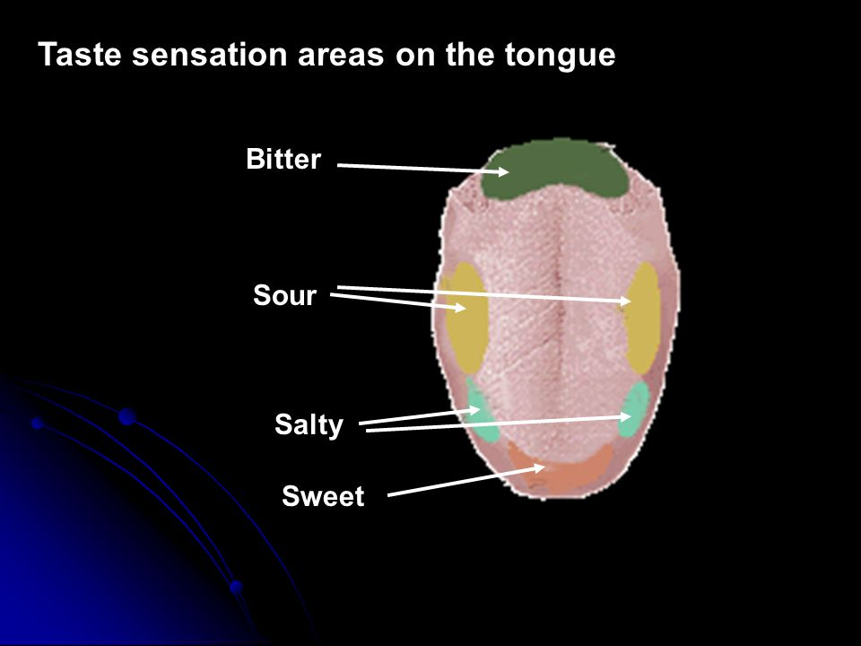 Taste sensation areas on the tongue