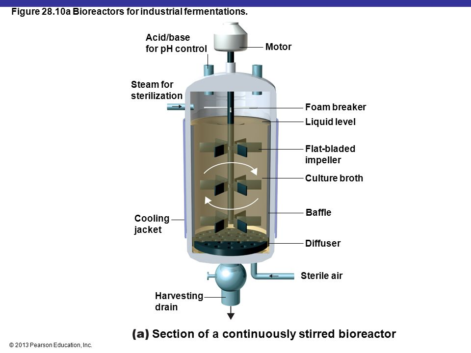 Section of a continuously stirred bioreactor