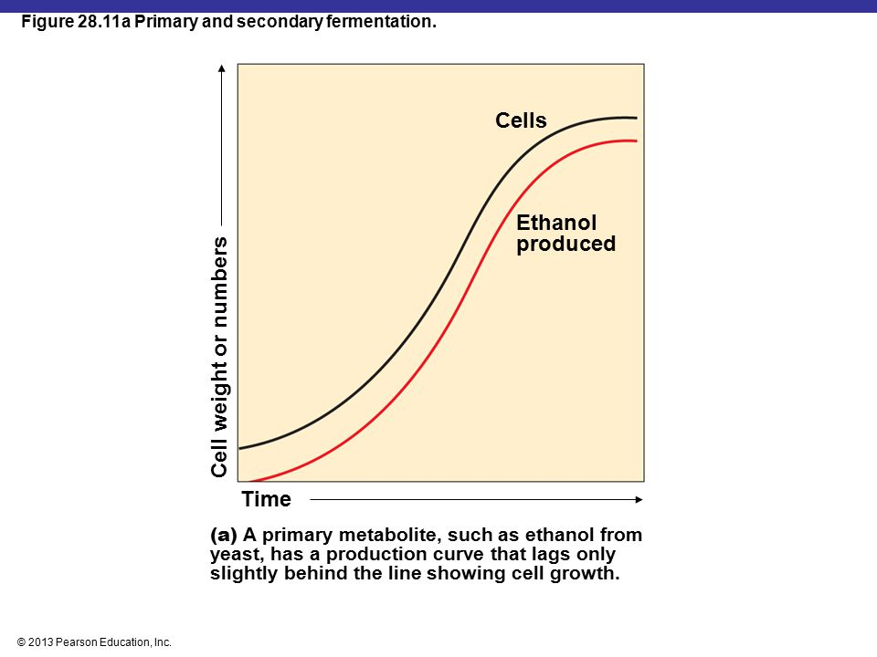 Cells Ethanol produced Cell weight or numbers Time
