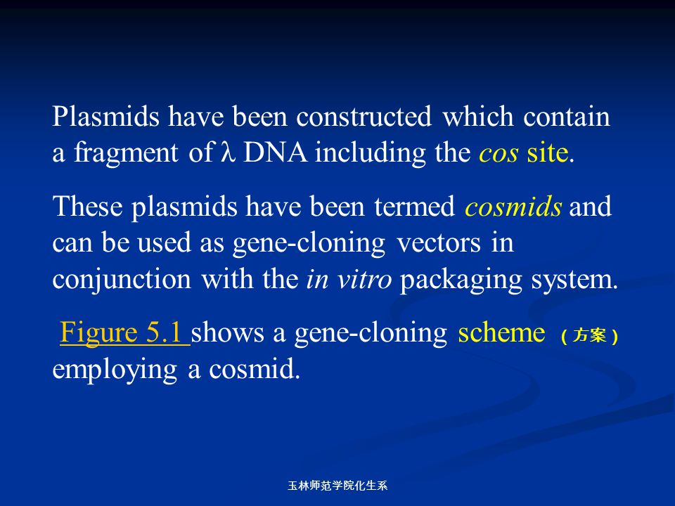 Figure 5.1 shows a gene-cloning scheme (方案)employing a cosmid.
