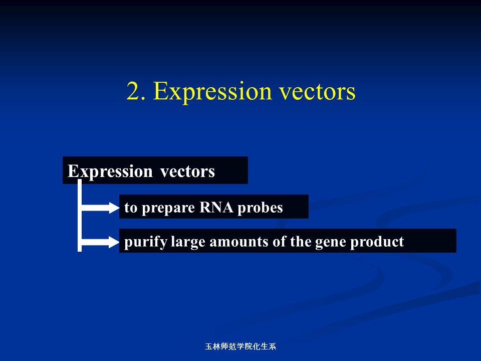 2. Expression vectors Expression vectors to prepare RNA probes