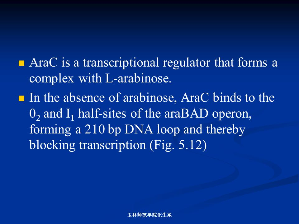 AraC is a transcriptional regulator that forms a complex with L-arabinose.