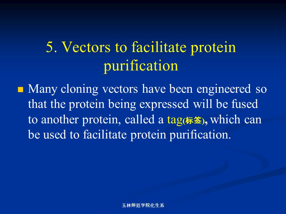 5. Vectors to facilitate protein purification