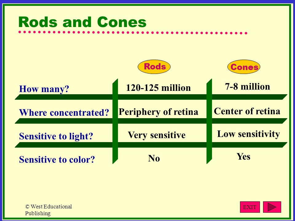 Rods and Cones 7-8 million 120-125 million How many