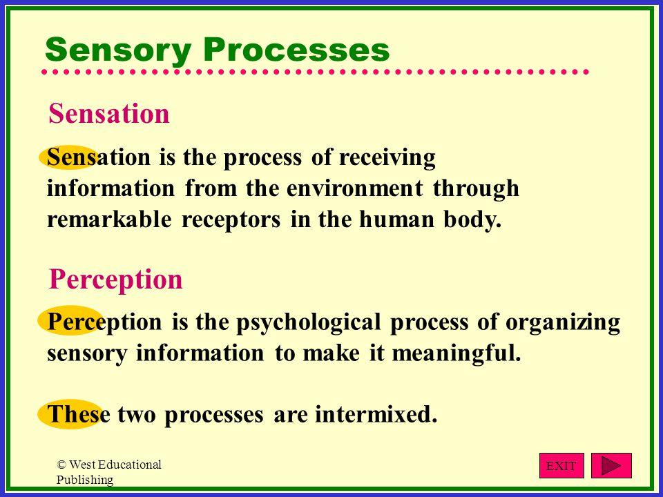 Sensory Processes Sensation Perception