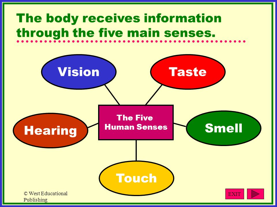 The body receives information through the five main senses.