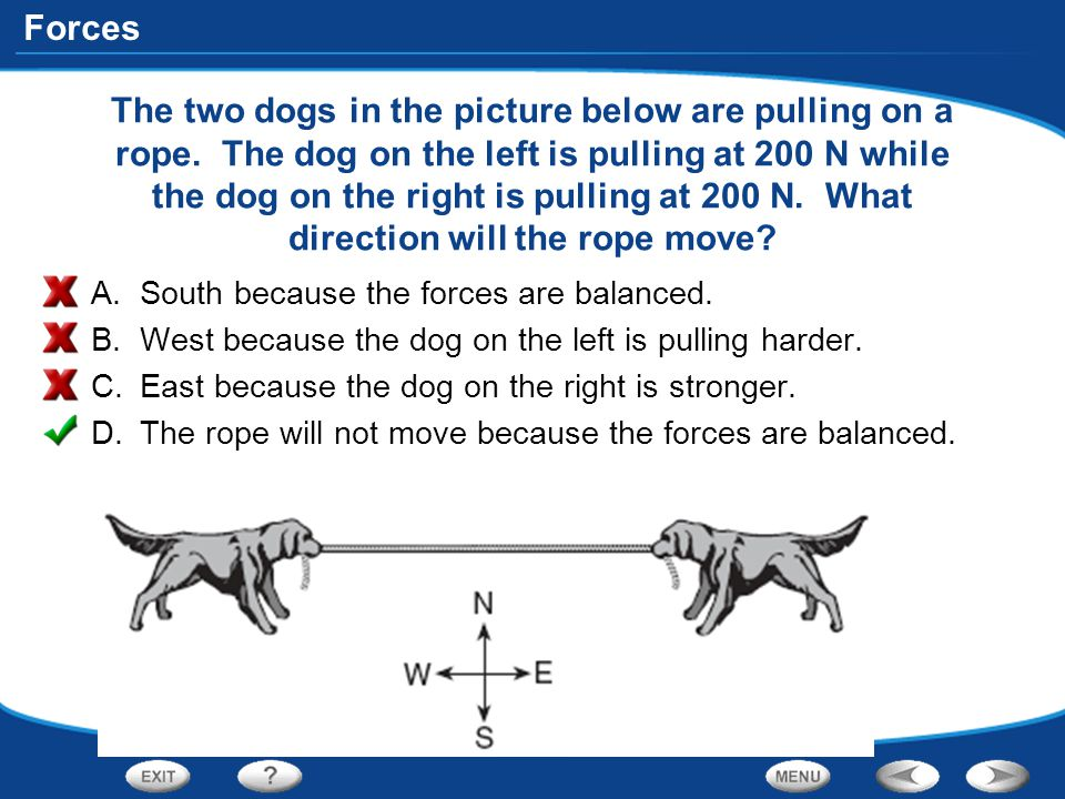 The two dogs in the picture below are pulling on a rope