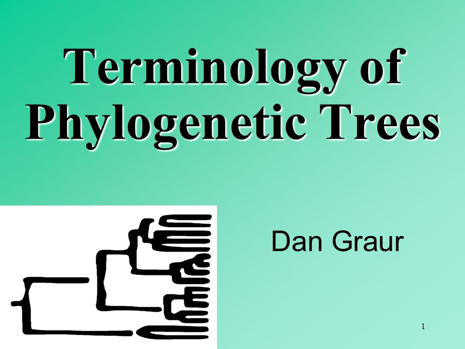 Terminology of Phylogenetic Trees