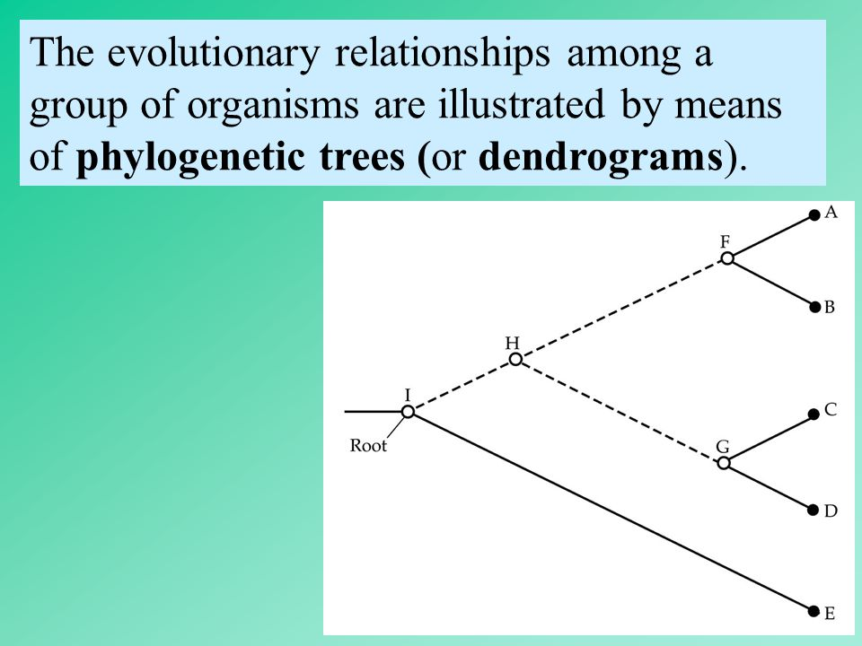 The evolutionary relationships among a group of organisms are illustrated by means of phylogenetic trees (or dendrograms).