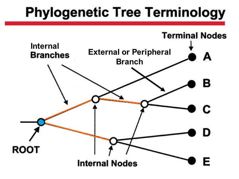 External or Peripheral