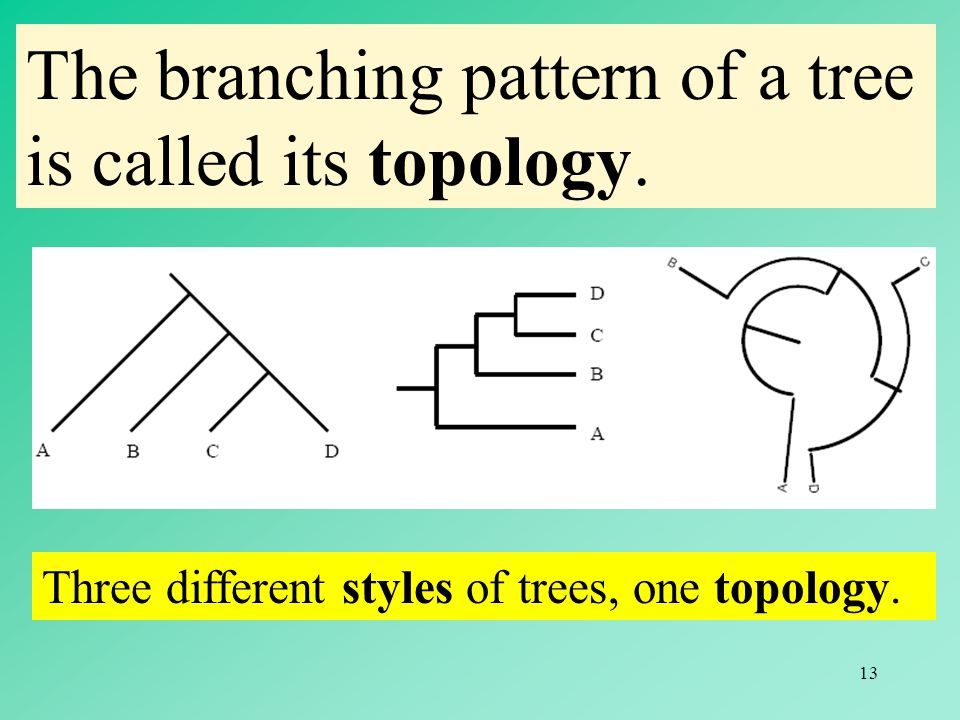 The branching pattern of a tree is called its topology.