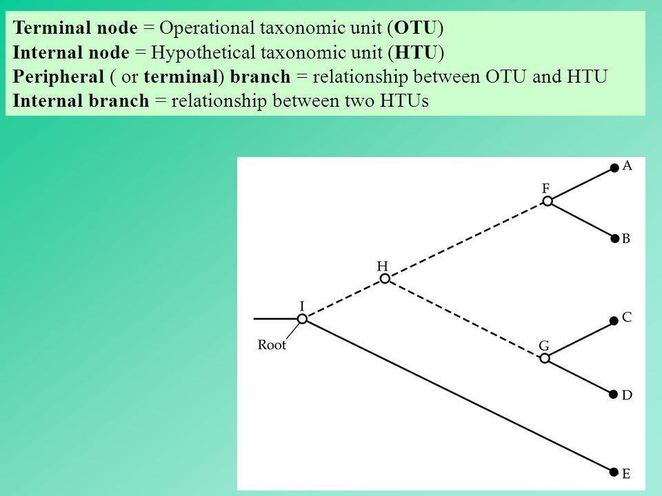 Terminal node = Operational taxonomic unit (OTU)