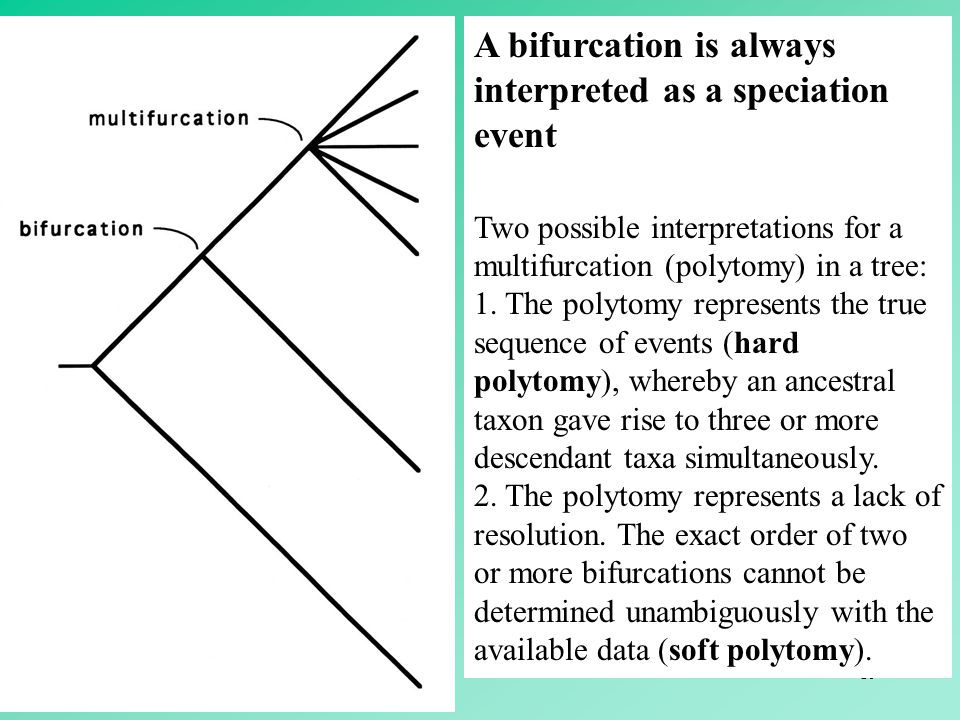 A bifurcation is always interpreted as a speciation event