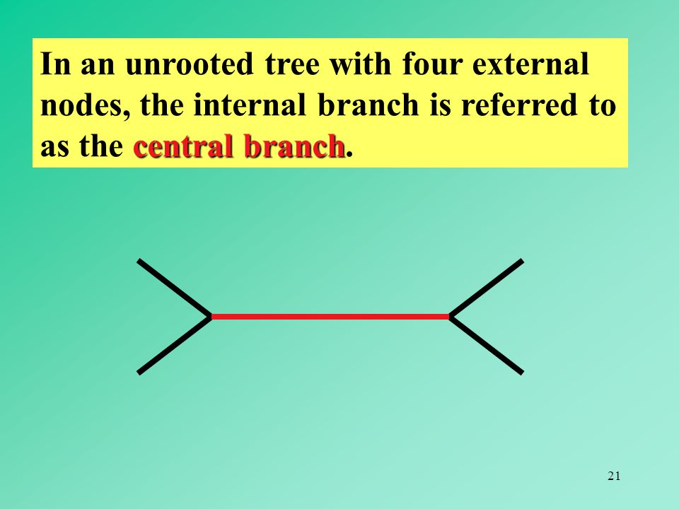 In an unrooted tree with four external nodes, the internal branch is referred to as the central branch.