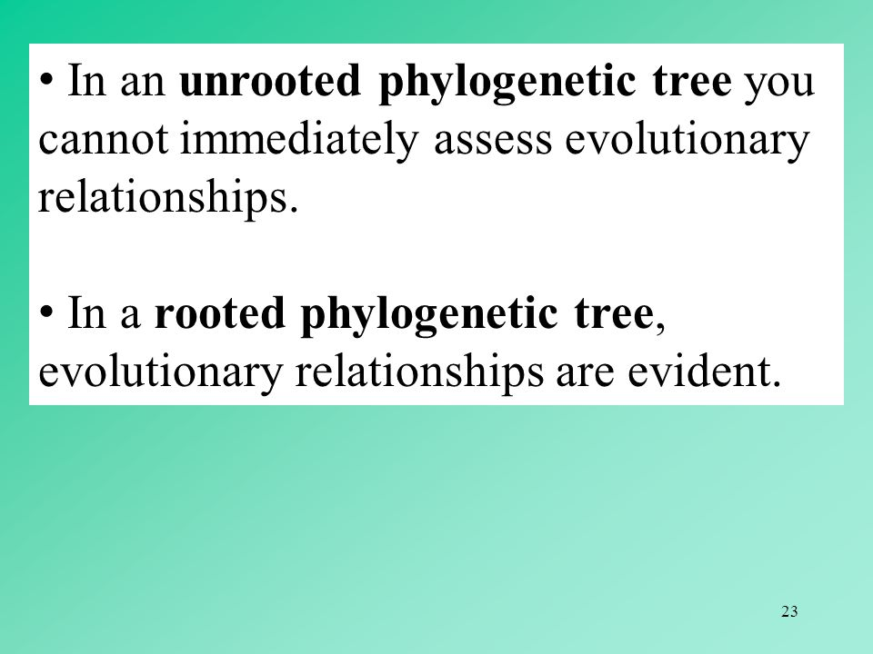 In an unrooted phylogenetic tree you cannot immediately assess evolutionary relationships.