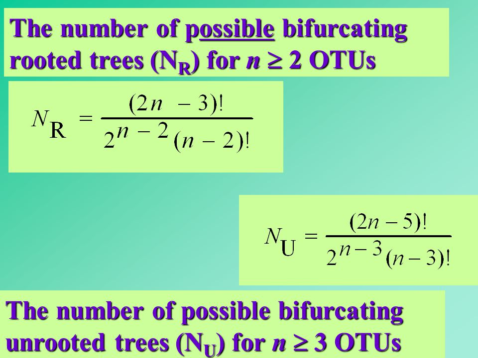 The number of possible bifurcating rooted trees (NR) for n  2 OTUs