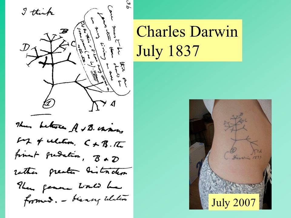 Charles Darwin July 1837 July 2007