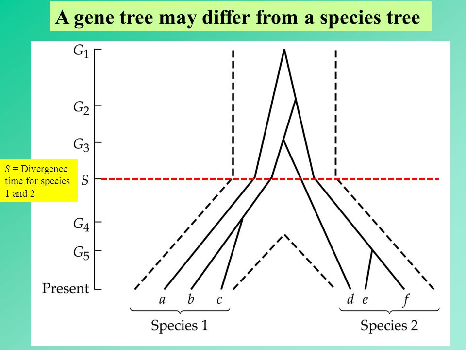 A gene tree may differ from a species tree