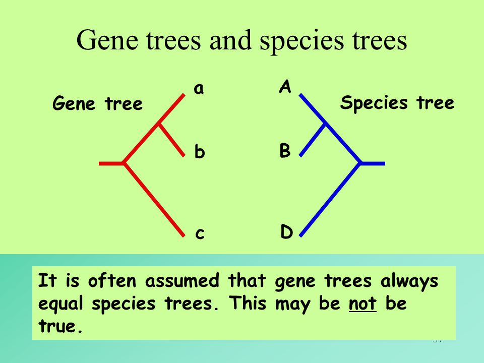 Gene trees and species trees