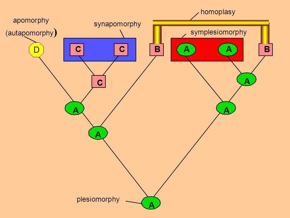 D C C B A A B C A A A A A homoplasy apomorphy (autapomorphy)