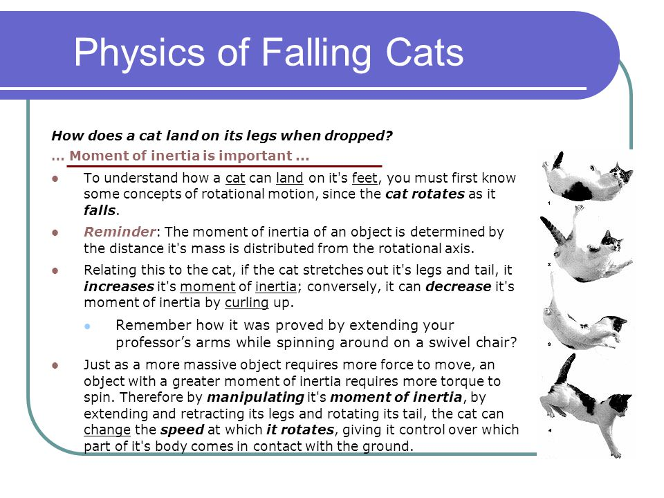 Physics of Falling Cats