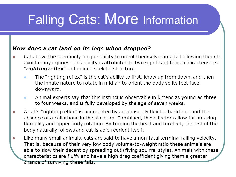 Falling Cats: More Information