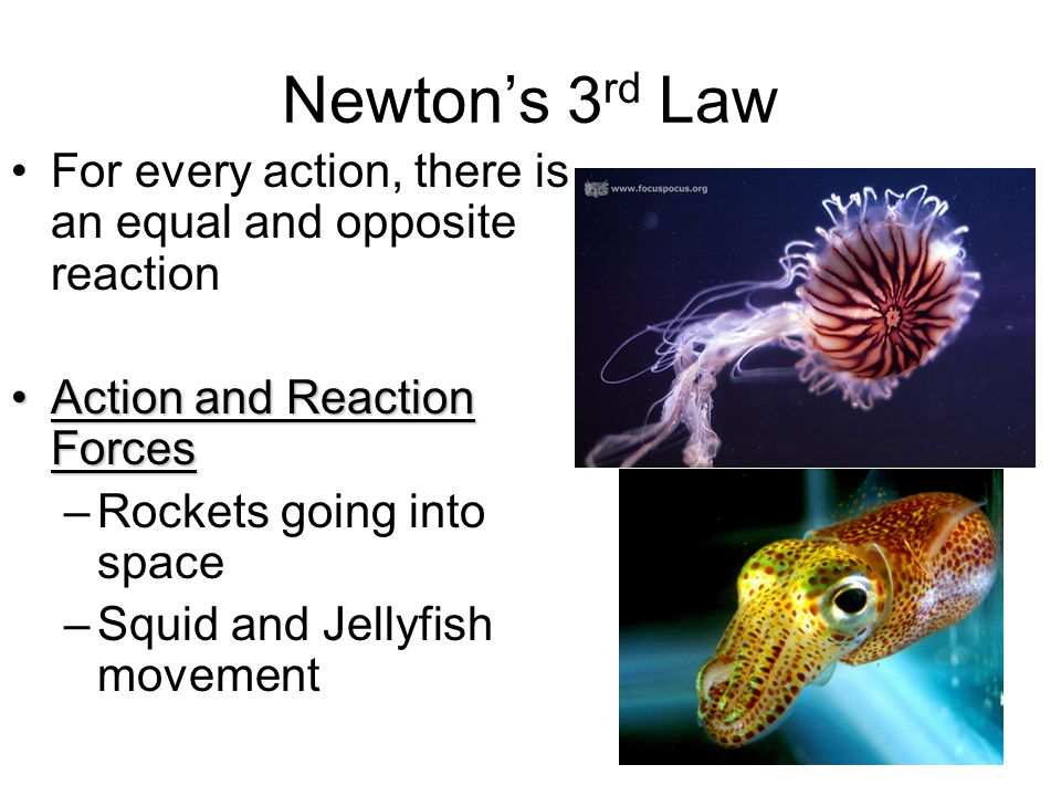 Newton's 3rd Law For every action, there is an equal and opposite reaction. Action and Reaction Forces.