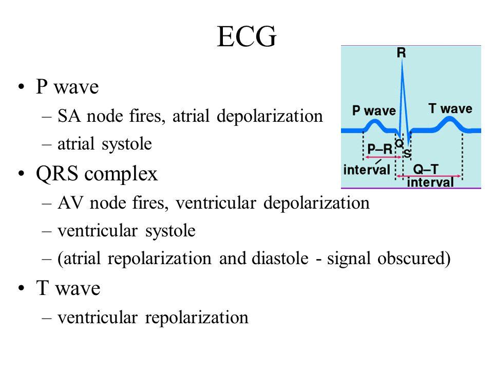 ECG P wave QRS complex T wave SA node fires, atrial depolarization