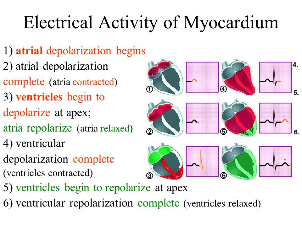 Electrical Activity of Myocardium