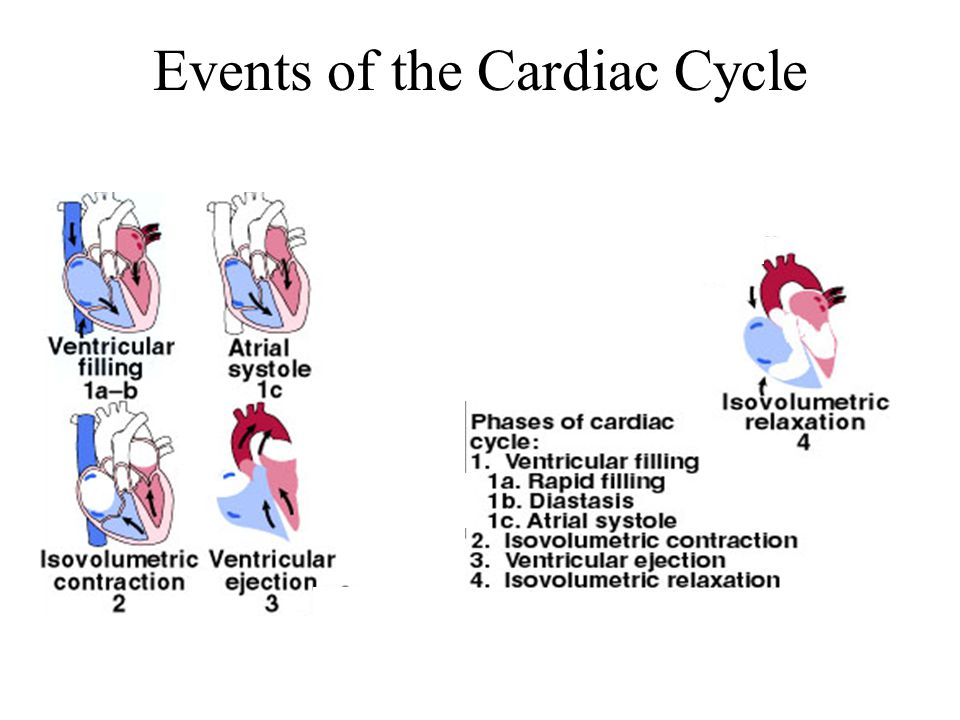 Events of the Cardiac Cycle
