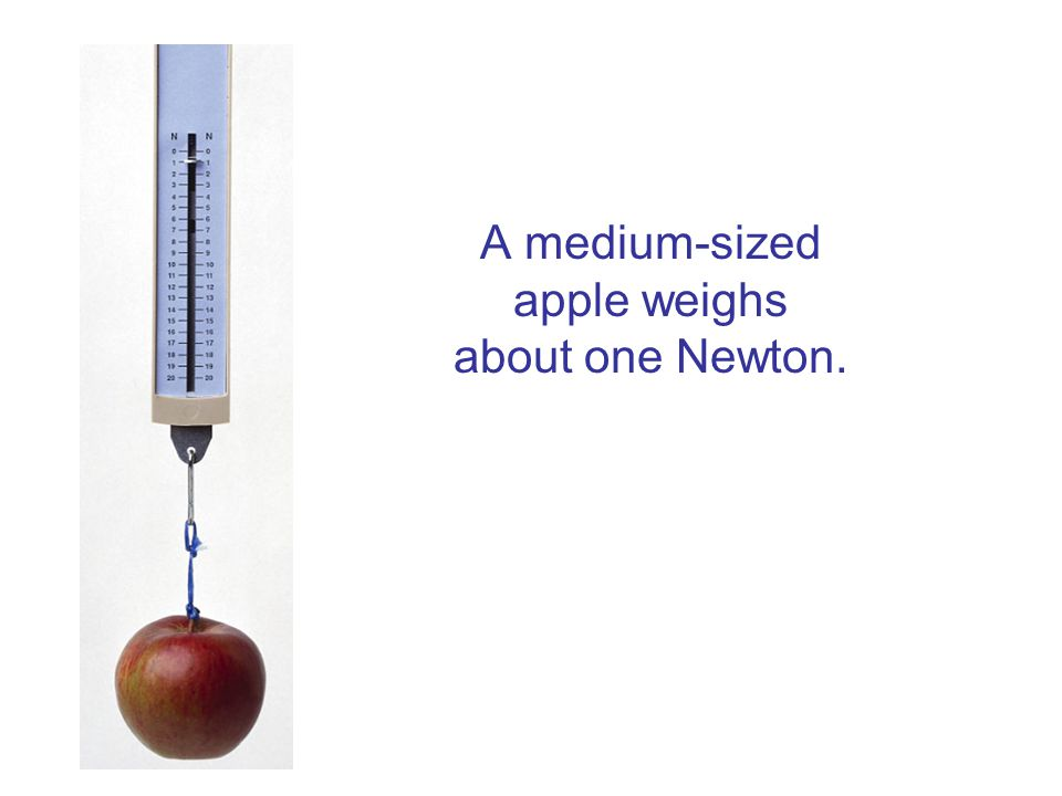A medium-sized apple weighs about one Newton.