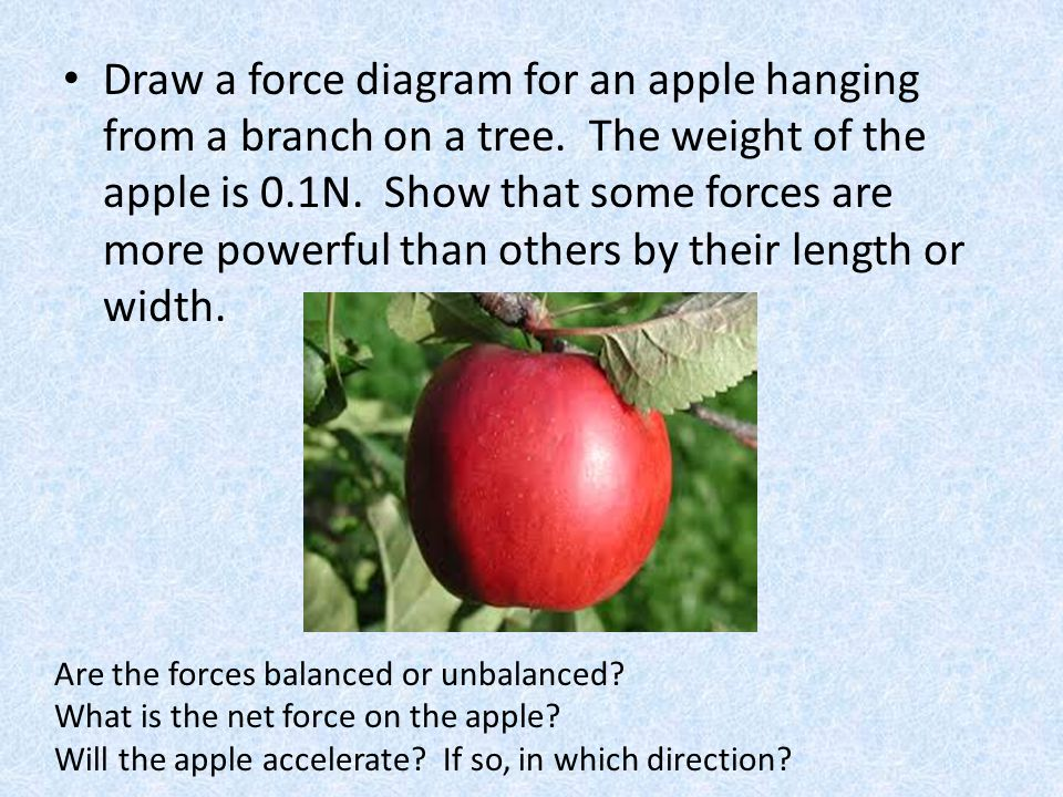 Draw a force diagram for an apple hanging from a branch on a tree