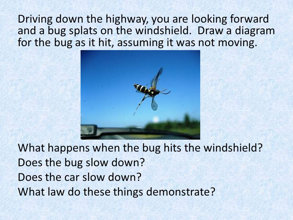 Driving down the highway, you are looking forward and a bug splats on the windshield. Draw a diagram for the bug as it hit, assuming it was not moving.