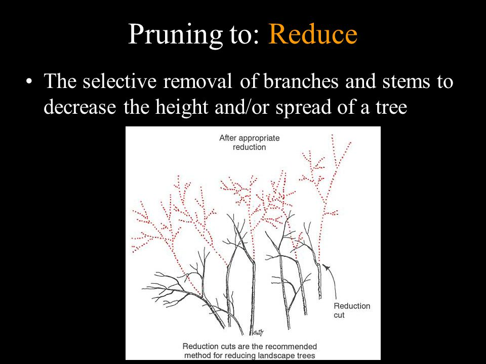 Pruning to: Reduce The selective removal of branches and stems to decrease the height and/or spread of a tree.