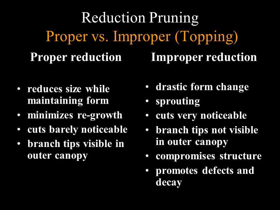 Reduction Pruning Proper vs. Improper (Topping)