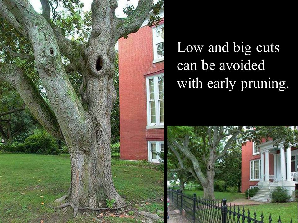 Low and big cuts can be avoided with early pruning.