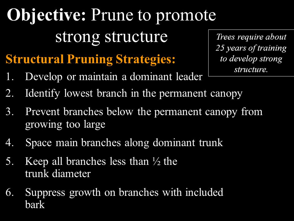 Objective: Prune to promote strong structure