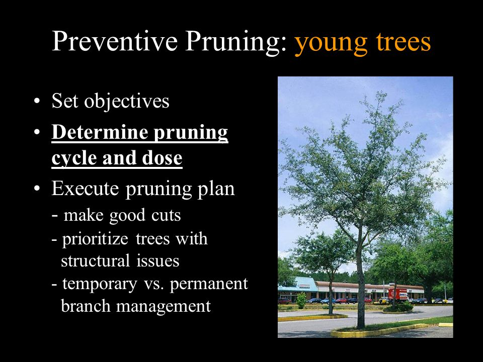 Preventive Pruning: young trees