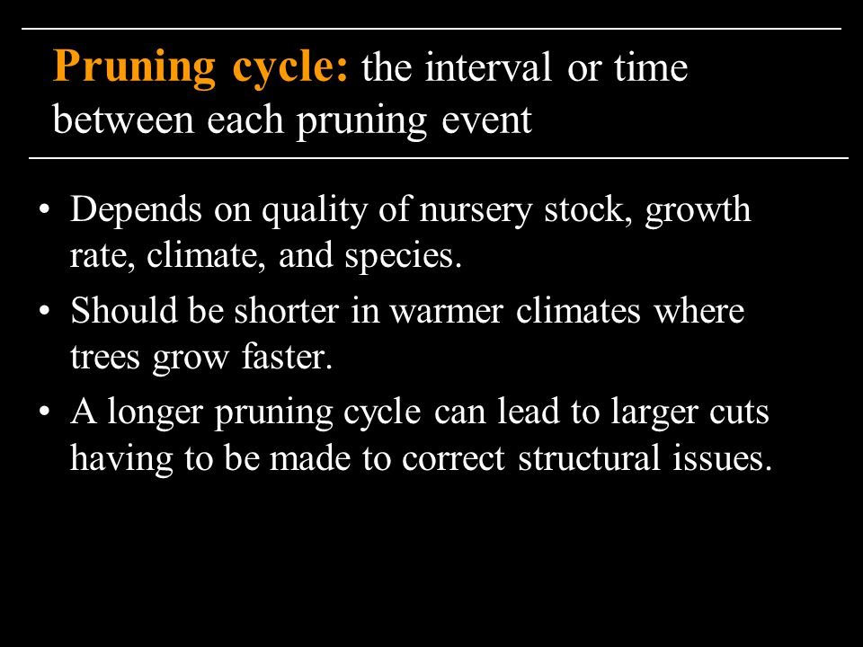 Pruning cycle: the interval or time between each pruning event