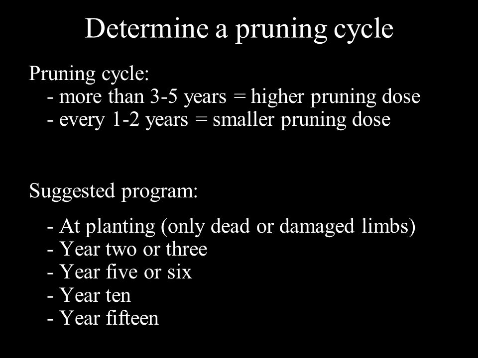 Determine a pruning cycle