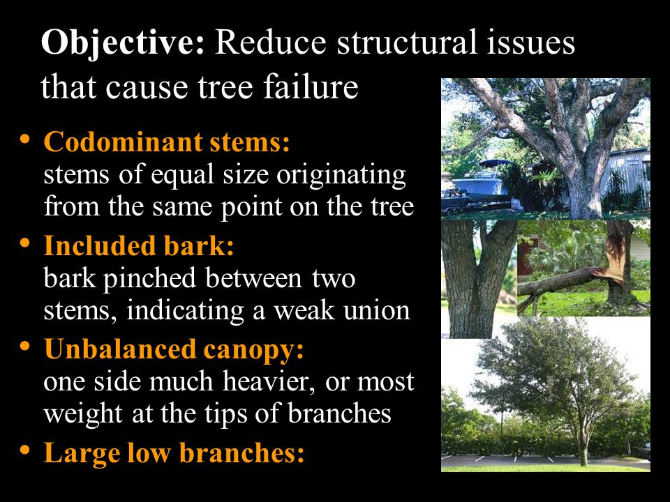 Objective: Reduce structural issues that cause tree failure