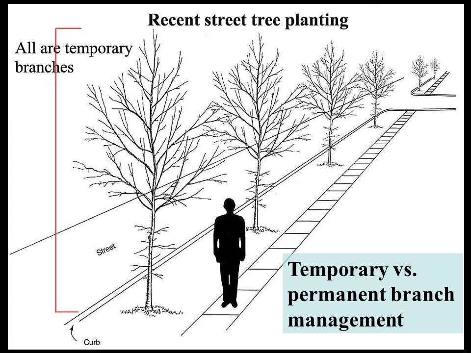 Temporary vs. permanent branch management