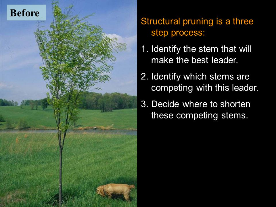 After Before Structural pruning is a three step process: