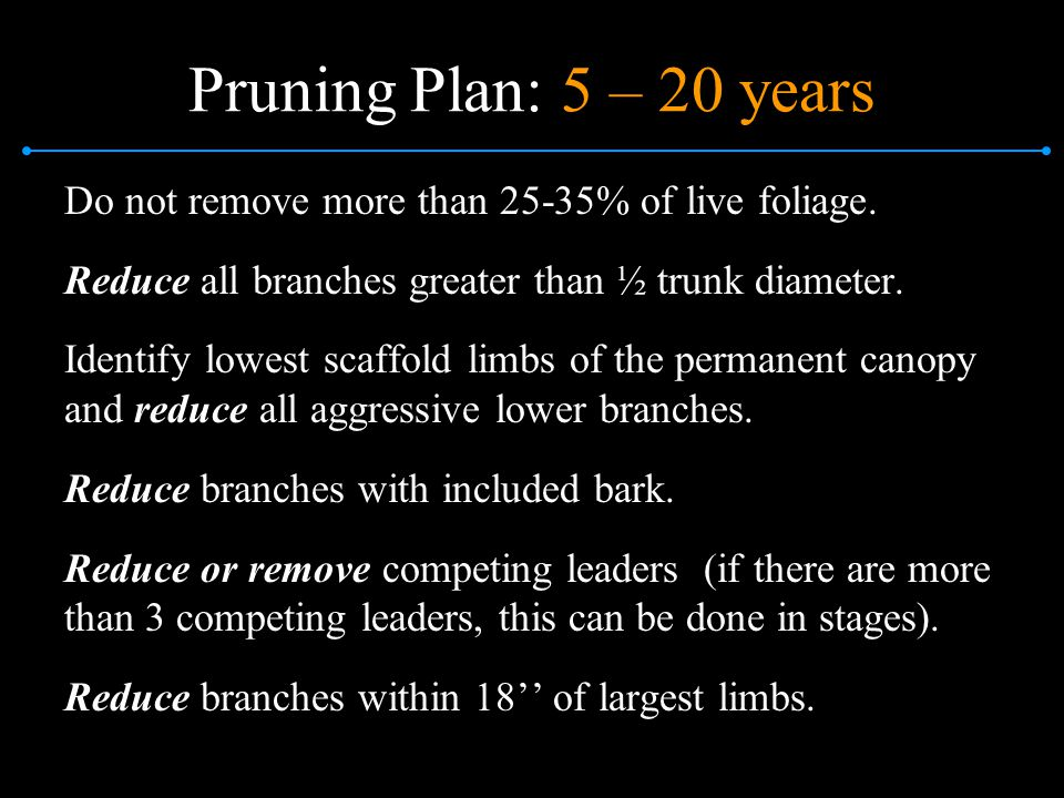 Pruning Plan: 5 – 20 years Do not remove more than 25-35% of live foliage. Reduce all branches greater than ½ trunk diameter.