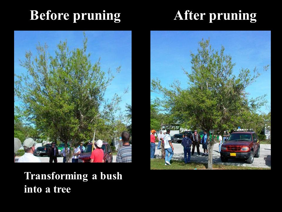 Before pruning After pruning