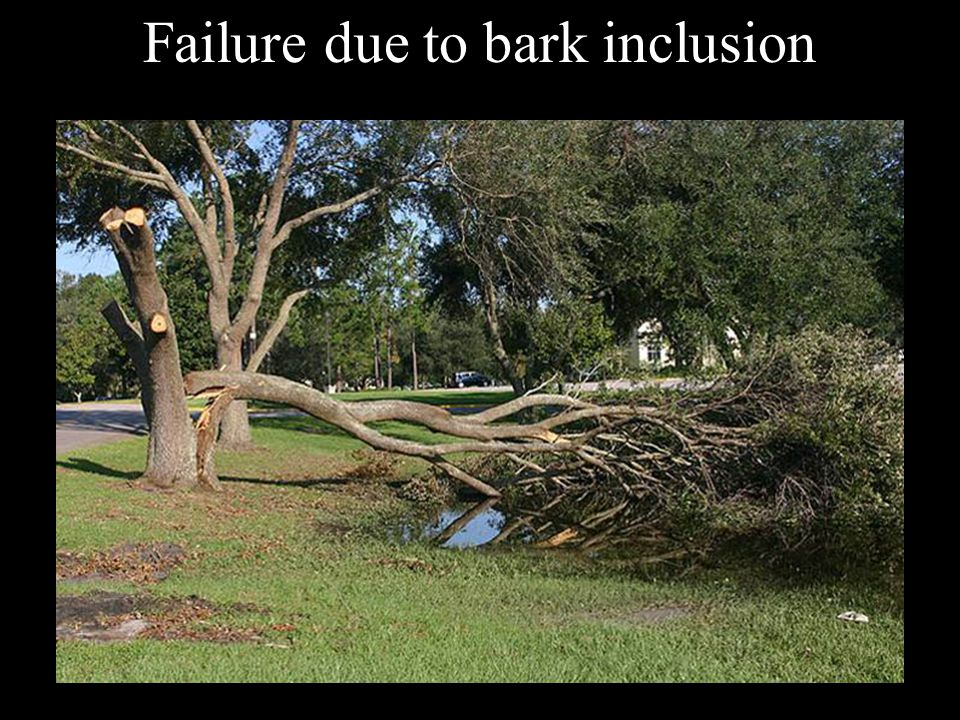 Failure due to bark inclusion