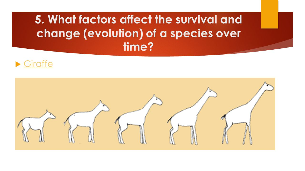 5. What factors affect the survival and change (evolution) of a species over time