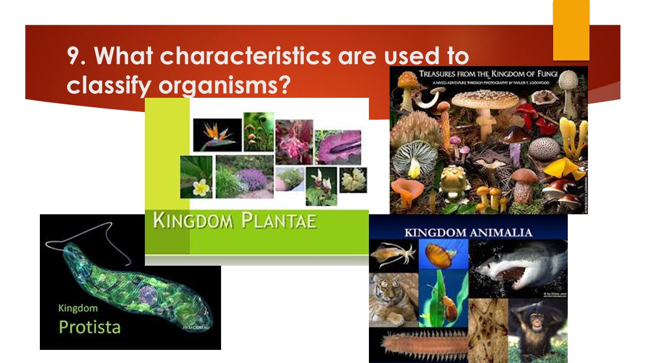 9. What characteristics are used to classify organisms