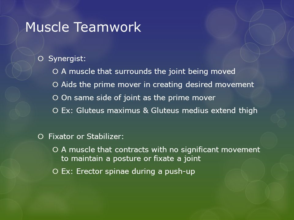 Muscle Teamwork Synergist: